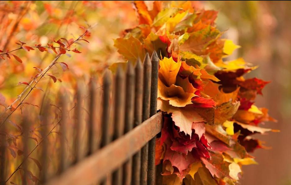 Осень глазами Артемия